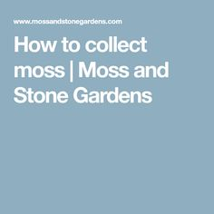 How to collect moss | Moss and Stone Gardens