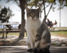 Cat, Fenerbahçe Parkı,İstanbul
