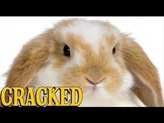 9 Adorable Animals (That'll Eat You If Given the Chance) - YouTube...this made me laugh too hard, this is pretty graphic, shouldn't make me laugh, but it was so true I was rolling laughing. My dad always said anything would eat you if it could, even a bunny or cuddley creature.