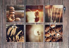 Fine art photography Wall art decor Set of 6 by AylilAntoniu