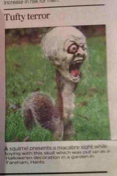 Squirrel gets head stuck in halloween skull. Via @Earth Pics