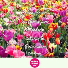 Podrán cortar las flores pero no podrán detener la Primavera. Pablo Neruda. www.miramami.com