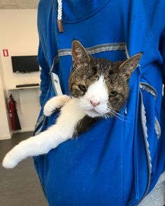 Epilepsy Medication, Down Syndrome Cat, He Doesnt Care, Summer Coats, Monty The Cat, Look Thinner, Everything Is Fine, Soft Summer, Cat Lady