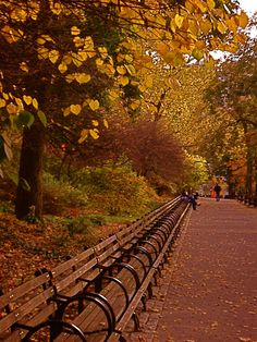 RIVERSIDE PARK, NYC, AUTUMN by Susan Tammany