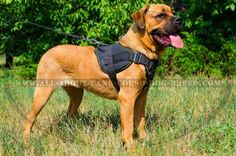 Looking for extra strong #dog #harness for pulling/tracking work? Your #Cane #Corso will feel comfortable and safe in this #Nylon #Dog #Harness.
