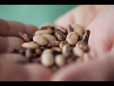 ▶ Growing Organic Beans - YouTube