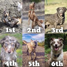 ITS TIME TO ANNOUNCE THE WINNERS OF THE #dirtydogscontest2016 GIVEAWAY!  We had so many amazing entries and it was so hard to narrow it down so without further ado: CONGRATULATIONS to our winners!  1st place: @austrailian_bacon --> DM @cozycama @oliveandatlas @dogaholics and @unleashthehounds for your prizes!  2nd place: @mycaninelife --> DM @greentroutoutfitters @phoebe_wuf_wuf @brotherscompletepetfood and @lendapaw for your prizes!  3rd place: @lonestarpups --> DM @brodsparacord_revolution…