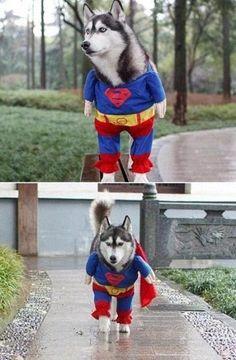 super-dog :D