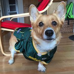 They had me worried but they pulled it out in the last 6 seconds! #gopackgo #gopack #packers #packersdog #packersnation #football #footballjersey #footballfan #packersfan #dogsinjerseys #greenbay #greenbaypackers