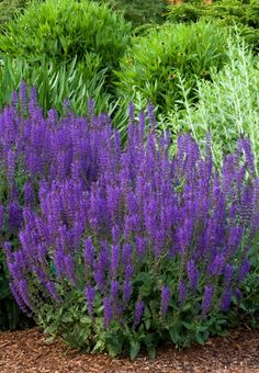 Round Up: 24 of the Best Low Maintenance Plants for Your Garden | Curbly