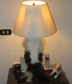 Cat's Lightbulb Moment–Caption This Cute Photo!