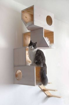 cat furniture, cool shapes and neat climbing structure. I like that its not a cat tree.Interesting cat furniture, cool shapes and neat climbing structure. I like that its not a cat tree. Cool Cats, Contemporary Cat Furniture, Niche Chat, Cool Shapes, Cat Shelves, Wood Shelves, Mounted Shelves, Cat Room, Cat Condo