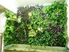 Mur végétal d'intérieur en aquaponie, photo Léon-Hugo Bonte