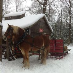 horse and sleigh at a local sugar shack