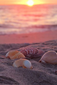 Ocean shells at sunset