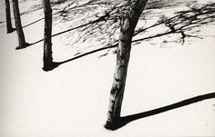 Abbas Kiarostami - Trees in Snow
