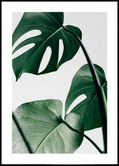 Items similar to Monstera Leaf Print Pink Green Wall art Botanical Print Printable Poster Boho Decor Scandinavian Minimalist Nordic Tropical Foliage Leaves on Etsy Gold Poster, Poster Art, Kunst Poster, Poster Prints, Art Posters, Canvas Poster, Event Posters, Retro Posters, Animal Posters