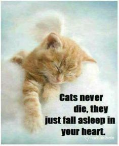 There's the dog people and then there's the cat people, and that battle may rage on forever. Cats are social creatures capable of relationships with people and let you love them most. I Love Cats, Crazy Cats, Cute Cats, Funny Cats, Cat Quotes, Animal Quotes, Pet Loss Grief, Pet Remembrance, Video Chat