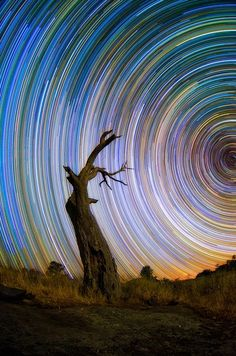 Australian photographer Lincoln Harris collection 'Star trails', surreal swirls in the sky, created from a multitude of long-exposure shots and the effect of the Earth's rotation. Light Painting, Cool Pictures, Cool Photos, Dark Tree, Star Trails, Science And Nature, Belle Photo, Night Skies, Nature Photography