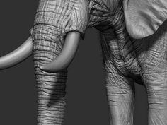 Adding some hair to the elephant Cute Baby Elephant, Elephant Art, African Elephant, Sculpting Tutorials, Art Tutorials, Elephant Anatomy, Animal Anatomy, Elephants Photos, Ceramic Animals