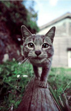Chat Curieux dans le Jardin.