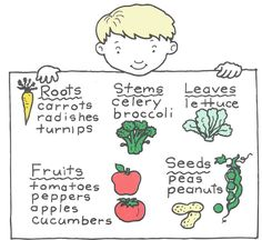 eat all parts of a plant! plus plant worksheets