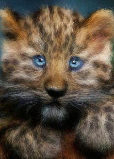 Kitten Lion, Kitten, Artwork, Animals, Leo, Cute Kittens, Kitty, Work Of Art, Animales