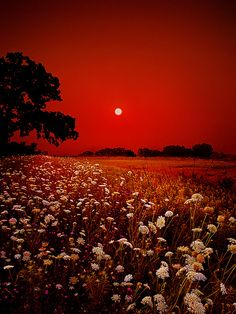 """Heavenly Peace"" red sky photo by Phil Koch"