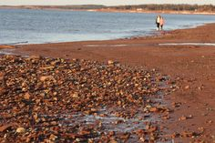 Miminegash, PEI Prince Edward Island, Island Life, Canada, Beach, Water, Pictures, Outdoor, Gripe Water, Photos