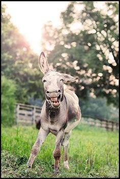 Animals Smiling