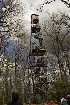 If You Live In Pennsylvania, You Must Visit This Amazing State Park -- Cook Forest State Park
