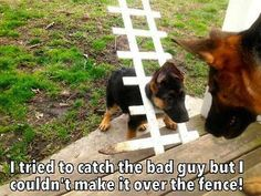 Funny Animal Jokes, Funny Animal Pictures, Cute Funny Animals, Funny Dogs, Cute Dogs, Animal Humor, Cutest Animals, Best Family Dog Breeds, Family Dogs