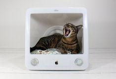 Como transformar objetos sem uso em caminhas para cães e gatos. Gavetas, malas, caixotes, pneus e monitores de televisão e computador velhos podem ser reutilizados como abrigos para nossos amiguinhos.