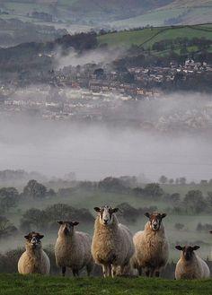 Sheep in the Highlands, Scotland Beautiful Creatures, Animals Beautiful, Beautiful Beautiful, Beautiful Things, Beautiful Flowers, Farm Animals, Cute Animals, Wild Animals, Photo Animaliere