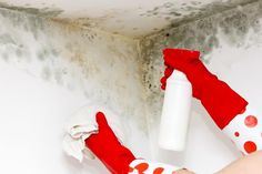 You can remove mold from walls effectively using a paste made from bleach and baking soda together because it stays on the wall as it works. While no one wants to be confronted with battling mold on ...