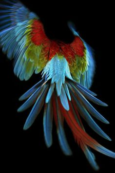 Parrot in flight. Taken by famed fashion photographer Solve Sundsbo, c. 2008.