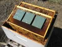 MiteGone for effective control of the varroa & tracheal mites Extreme Weather, Bee Keeping, British Columbia