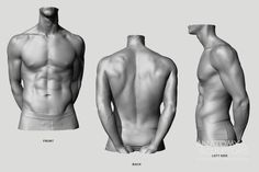 Anatomy Next - Anatomy: - Torso: Proportions