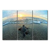 Found it at Wayfair - 'Turtle' by Christopher Doherty 3 Piece Photographic Printt on Wrapped Canvas Set