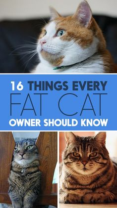 Cat Nutrition Facts 16 Things Every Fat-Cat Owner Should Know - Here's how to take the best care of your tubby tabby. I Love Cats, Crazy Cats, Cute Cats, Funny Cats, Cats Humor, Funny Horses, Adorable Kittens, Funny Animal, Cat Care Tips