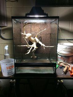 Click the image to open in full size. Terrariums, Terrarium Diy, Glass Terrarium, Tarantula Enclosure, Snake Enclosure, Reptile Cage, Reptile Habitat, Lizard Terrarium, Snake Cages