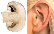 Nature Pharmacy Mushrooms improve hearing abilities, since they contain vitamin D, which is healthy for bones, especially the 3 tiny bones in the ear that tranmit sound to the brain. Diesnt it resemble the shape of the human ear when sliced in half.