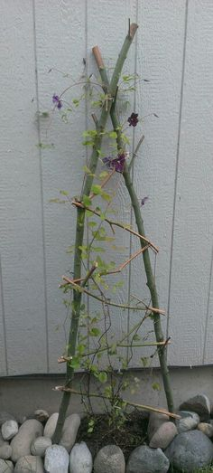 Trellis- very simple! I want to try this with my clematis.