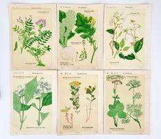 日本の古い植物図鑑