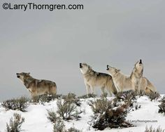 Larry Thorngren photography  IMG_5795.jpg
