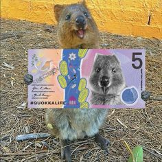 Quokka Life presents the new currency of Rottnest Island. Living the Quokka Slow Life