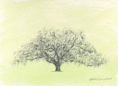 Oak Tree Drawing Watercolor Painting Savannah Candler Oak in Moss ...