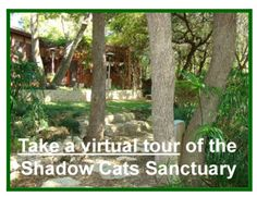TAKE A VIRTUAL TOUR OF THE SANCTUARY. Thanks go to @Penny L. Peerce for the making of this video. ©2012 goofy girl productions #shadowcatsrescue #felv #goofygirlproductions