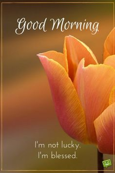 Good morning quote about blessings on picture with orange tulip. Funny Good Morning Images, Good Morning Images Flowers, Good Morning Picture, Good Morning Messages, Morning Pictures, Good Morning Wishes, Sunday Wishes, Funny Morning, Morning Pics