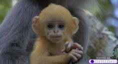 cute animals 10 Cute animals never cease to amaze me... (25 photos)